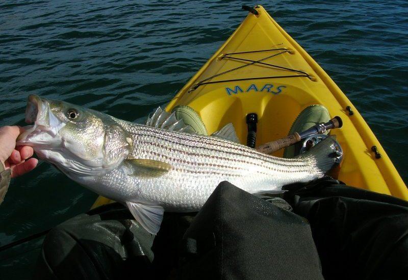 fishing-558232_1920